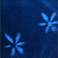 コスモス ブルー